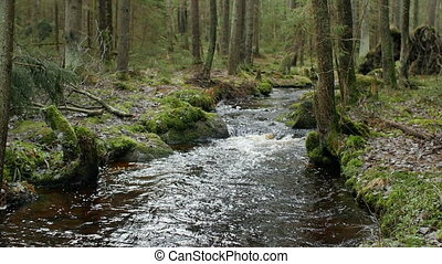 forest river panorama