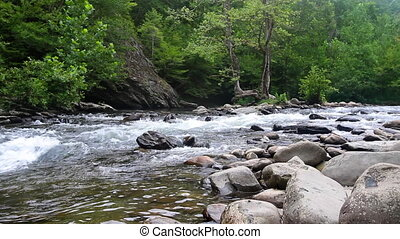 Scenic forest river in the Smokey Mountains