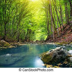 forest., rivière, montagne