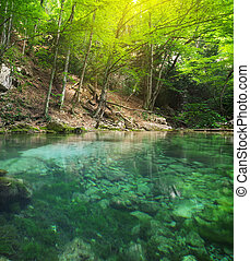 forest., rivière, profond