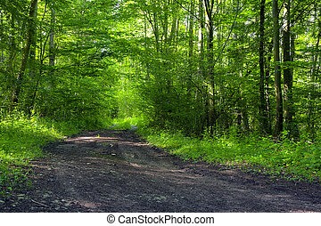 Forest road - A dirt road in the mixed forest (beech, oak ...