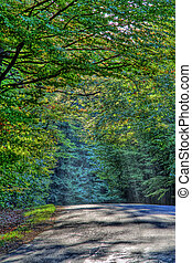 Forest road abstract background in hdr