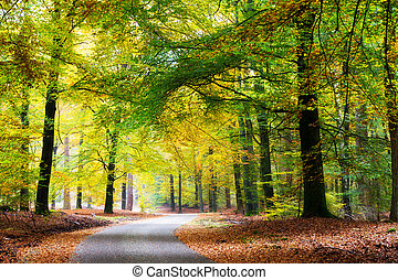 Beautiful road through the forest in autumn in national park 'De Hoge Veluwe' in the Netherlands