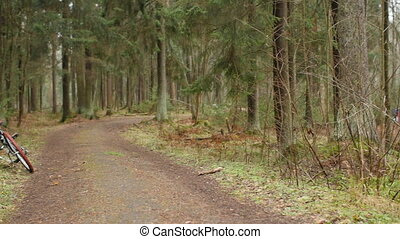 forest road, bicycle in the foreground