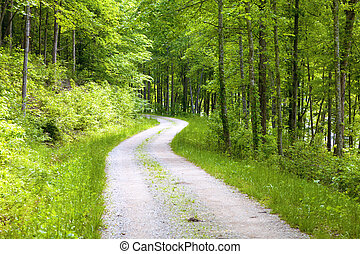 Forest road - Gravel road in the forest in Eastern Kentucky