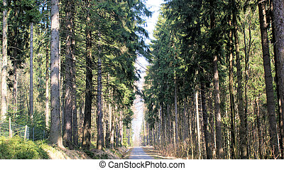 Forest road in the Erzgebirge