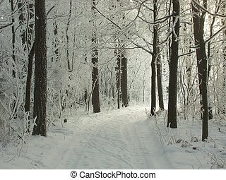 Forest road in winter landscape