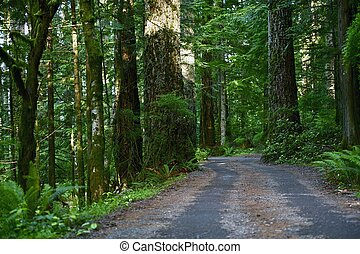Forest Road North California