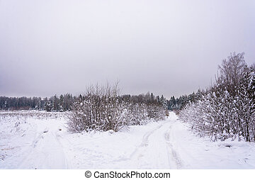 Forest road on a winter day.