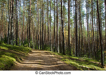 Forest road - Shaded road in the summer boreal forest