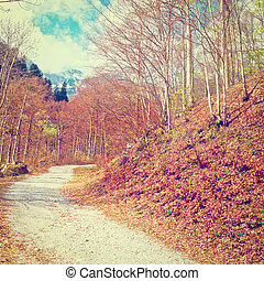 Forest Road - Dirt Forest Road on the Slopes of the Italian...