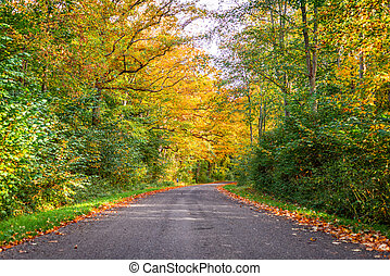 Forest road surrounded by colorful trees