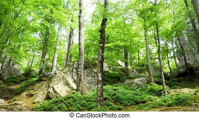 Forest roks mountain stone - National park roks mountain...