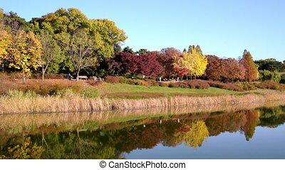 forest., séoul, sud, olympique, vrai, time., parc, automne,...