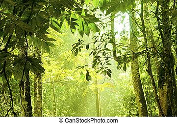 forest., sűrű