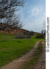 Forest sandy winding road. landscape