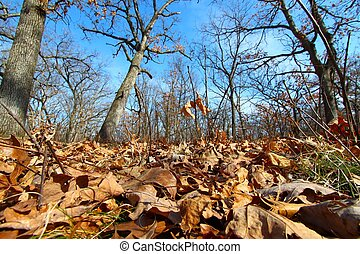 Forest Scene - Illinois