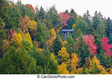 Forest scene near Blackwater Falls in the Fall