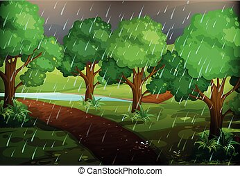 Forest scene on rainy day