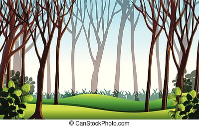 Forest scene with green grass