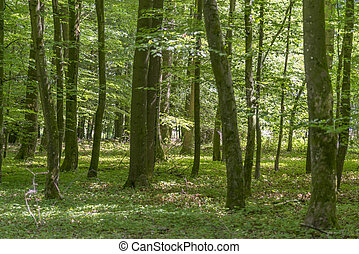 forest scenery at summer time