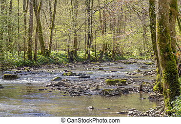 idyllic river at spring time