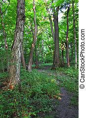 Forest Scenery - Shabbona, Illinois - A beautiful woodland...