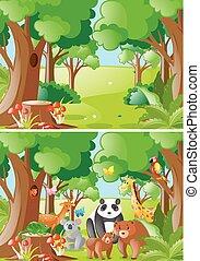 Forest scenes with wild animals