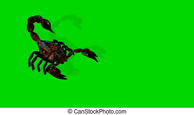 forest scorpion in an aggressive posture isolated on green...
