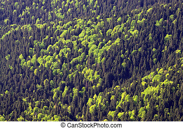 forest seen from above