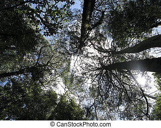 forest seen from below