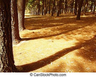Shadows - Forest Shadows