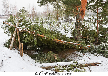 forest shelter of pine branches in the winter forest