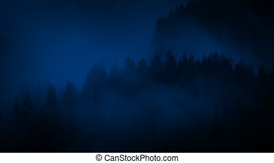 Forest Shrouded In Mist At Night