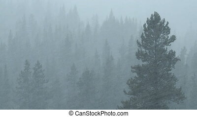 Forest snowfall - Snow fall in the forest