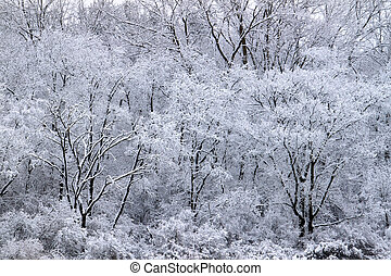 Forest Snowfall Landscape Illinois