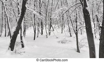 Layer of fresh snowfall creates a dramatic monochrome snowscape in this Ukrainian forest wilderness. 4k Ultra HD video