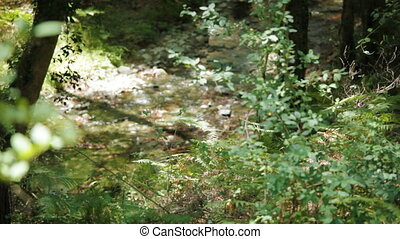 Forest spring in Trodos mountains, Cyprus. Tripod shot, no...