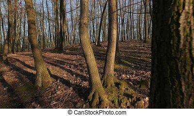 Forest spring walk - Forest walk spring trees around