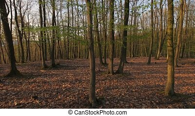 Forest spring walk