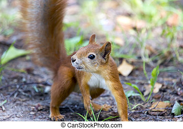 forest squirrel on a sunny day
