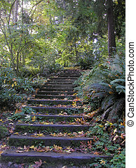 Forest Steps - Steps built into a path up a hill in...