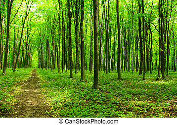 forest - a path is in the green forest