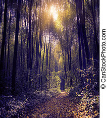 forest - The magic forest in the early morning