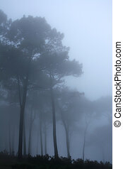 Forest - Picture taken during a misty day on Signal hill...