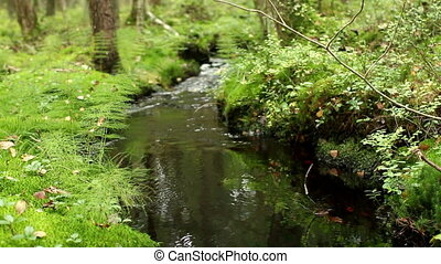 stream among the greenery - Forest stream among the greenery...