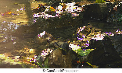 forest stream flows through the stone bottom, the sun's rays reflect in the water and make sparkles