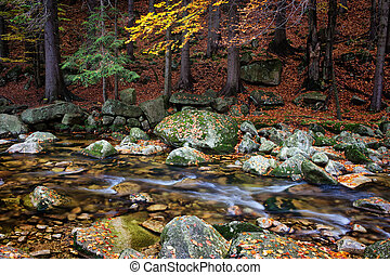 Forest Stream in Autumn Mountains