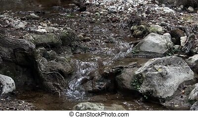 Forest stream in the rock