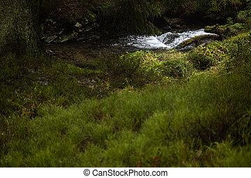 Forest stream Nature background landscape river